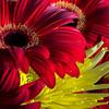 Flower Details