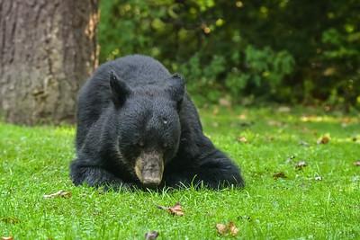 Shhh... the bear is sleeping