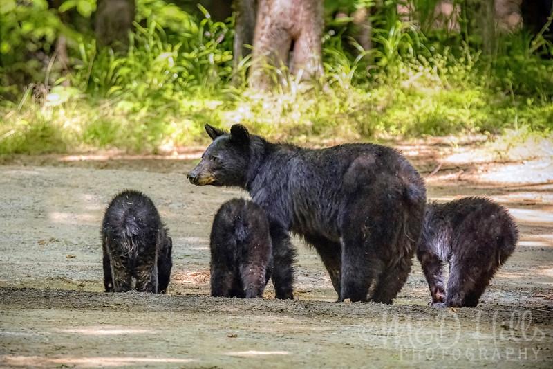 Bear Bums