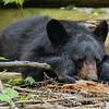 Let Sleeping Cubs Lie