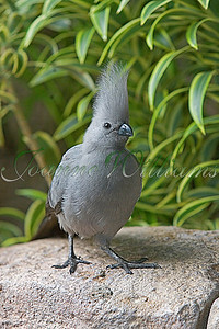 GoAway Bird