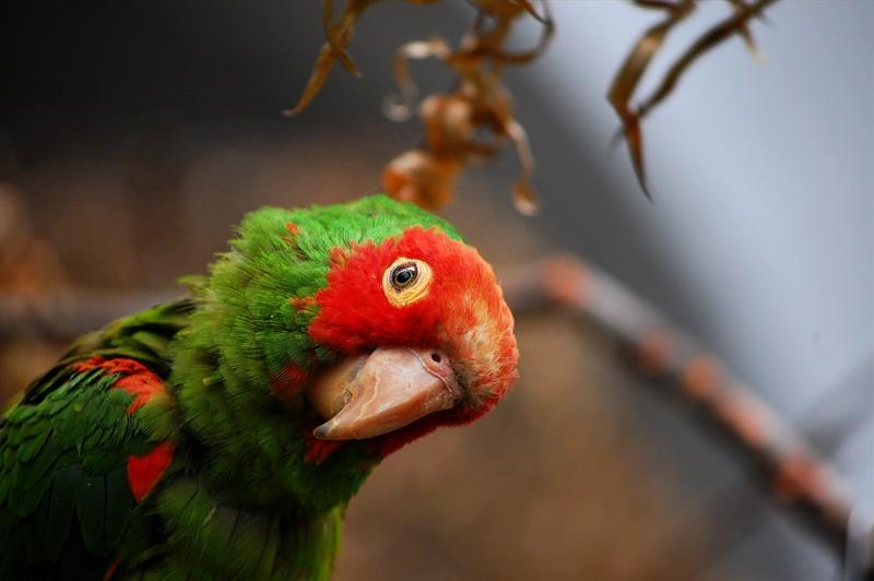 Inquisitive Parrot