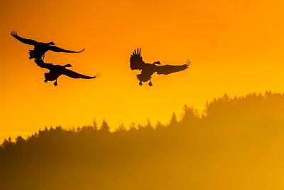 Sunrise Landing in Cowichan Bay