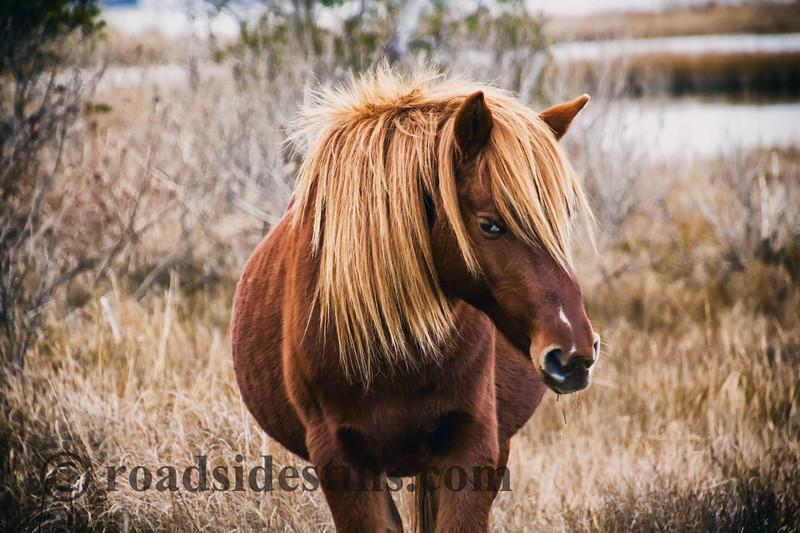 Wild Horse Classic