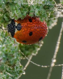 Hidden Ladybug