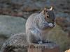 Squirrel Eating 108