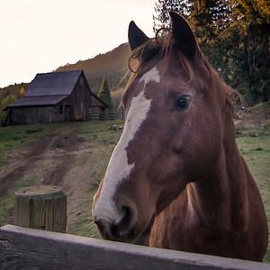 Horse Portrait in Glenora