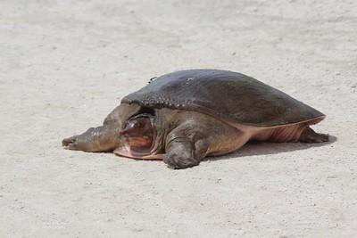 Lake Apopka Wildlife Drive