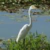 Oakland Nature Preserve