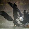 Eagles Dance 2