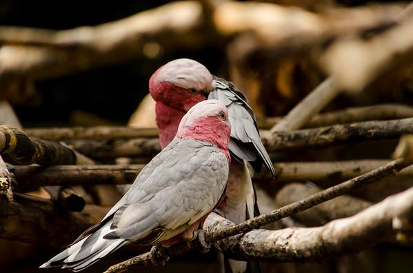 Wildlife & Pet Photography