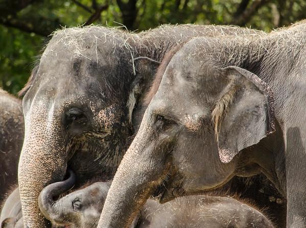 20140907 Stephen Romay Zoo