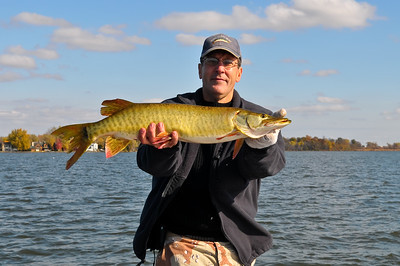 "33"" musky caught October 25, 2009.  Fish was released."