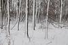 March snow, Horicon Marsh