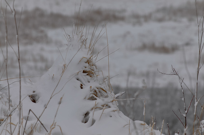 March snow, Horicon Marsh