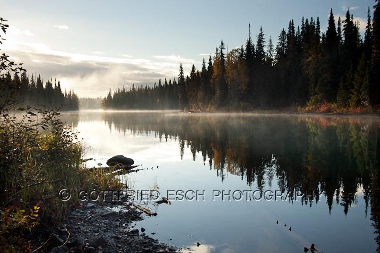 050929_Meziadin Lake, Joe, Grizzly at Tintina Creek_006