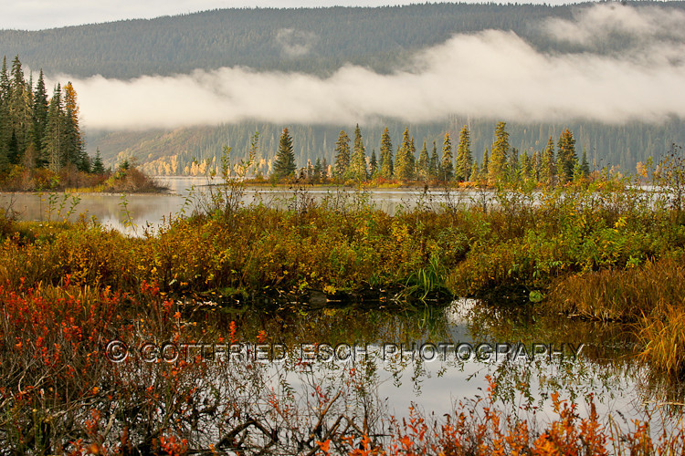 051003_Meziadin Lake, Joe, Grouse_014