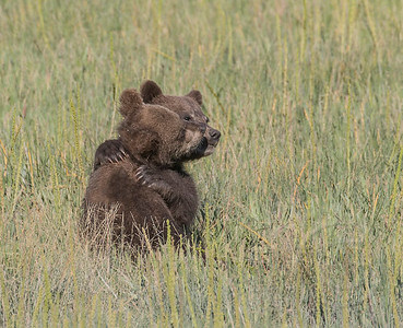 Sibling Bear Hug