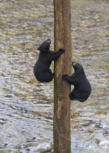 Carefree Climbing Cubs