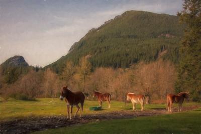 Brown Mules Spring Afternoon - Monet Version