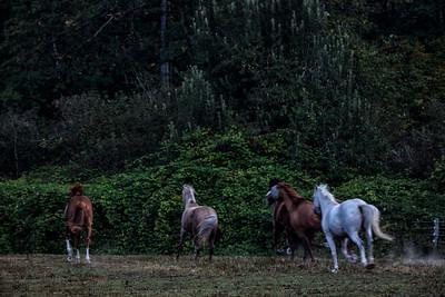 Horses Racing Early Morning 9-7-18