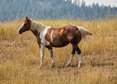 Horse and two birds on the ground near Blue Creek WA 8-10-18