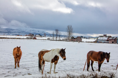 Horses farm scene barns Kittitas WA winter snow 2-19-17