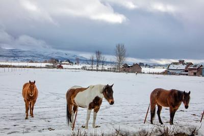 Horses farm scene barns Kittitas WA winter snow 2-19-17