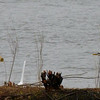 egret with nice fish and heron watching