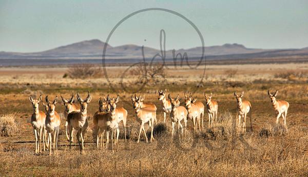 Jill D Miller-_K7A9106 antelope 6 1MB~in