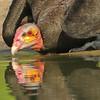 27Sep19a Pantanal 283portrait