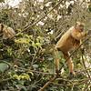 22Sep19a Pantanal 279