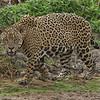 24Sep19 Pantanal 343