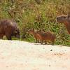 23Sep19 Pantanal 066