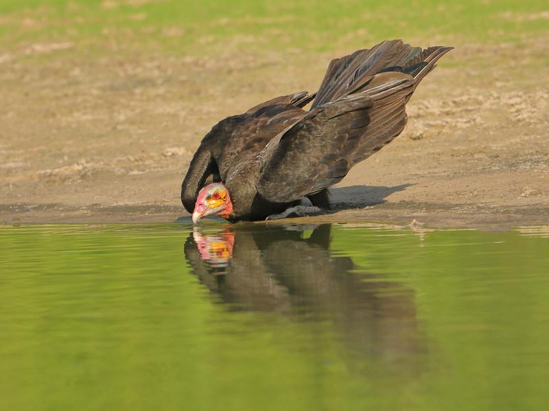 27Sep19a Pantanal 283