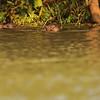 21Sep19a Pantanal 264
