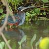 21Sep19 Pantanal 274