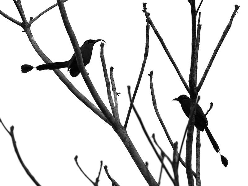 28Sep19a Pantanal 006bw