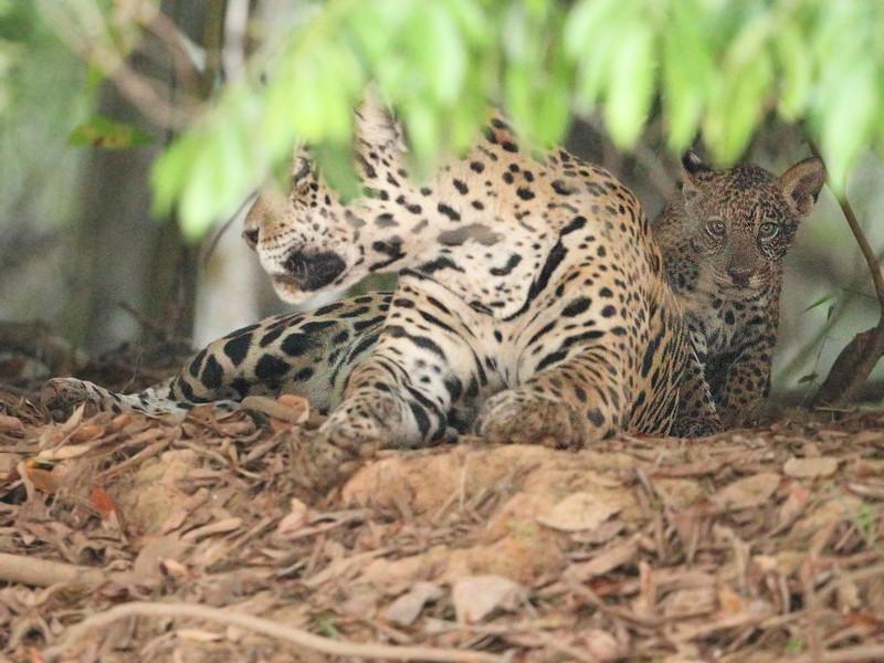 23Sep19 Pantanal 322