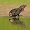 27Sep19a Pantanal 290