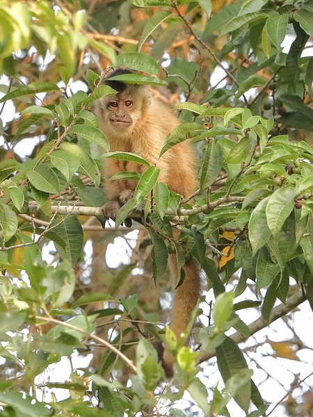 21Sep19a Pantanal 290