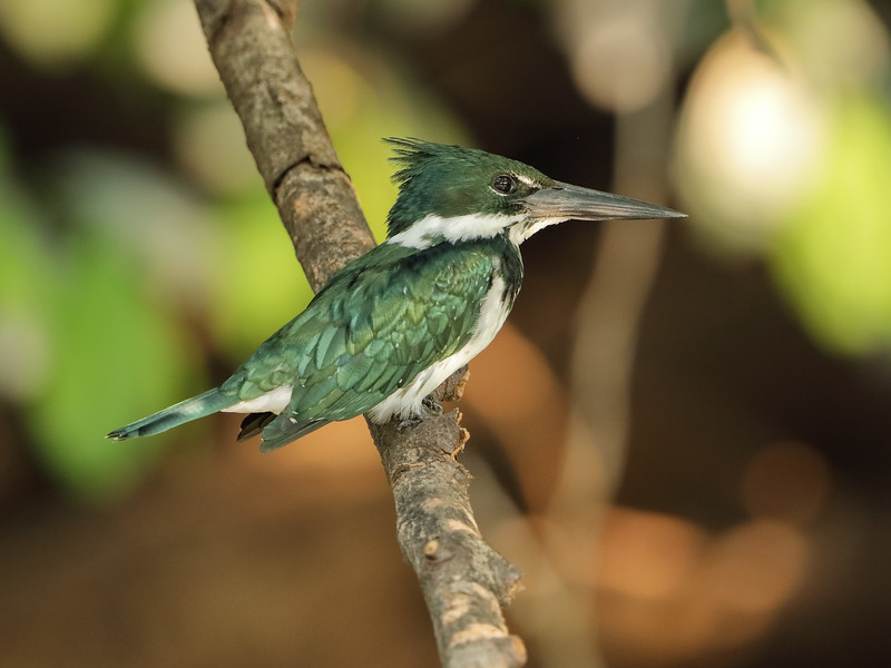 21Sep19a Pantanal 112