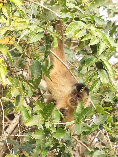 21Sep19a Pantanal 302