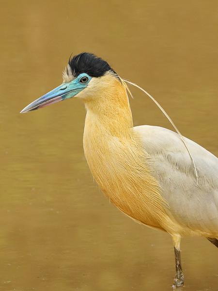 22Sep19 Pantanal 067