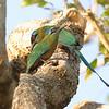 27Sep19 Pantanal 397
