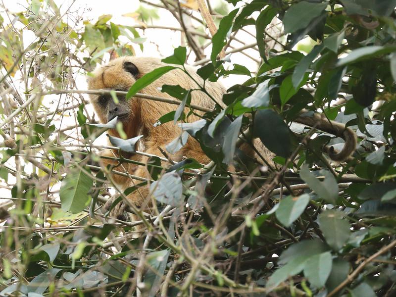 22Sep19a Pantanal 288