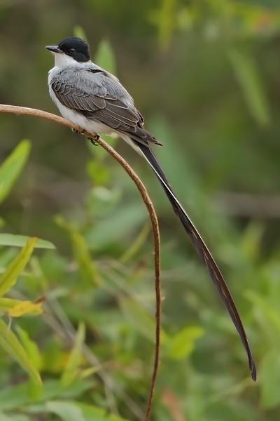 24Sep19b Pantanal 195a