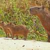 23Sep19 Pantanal 065