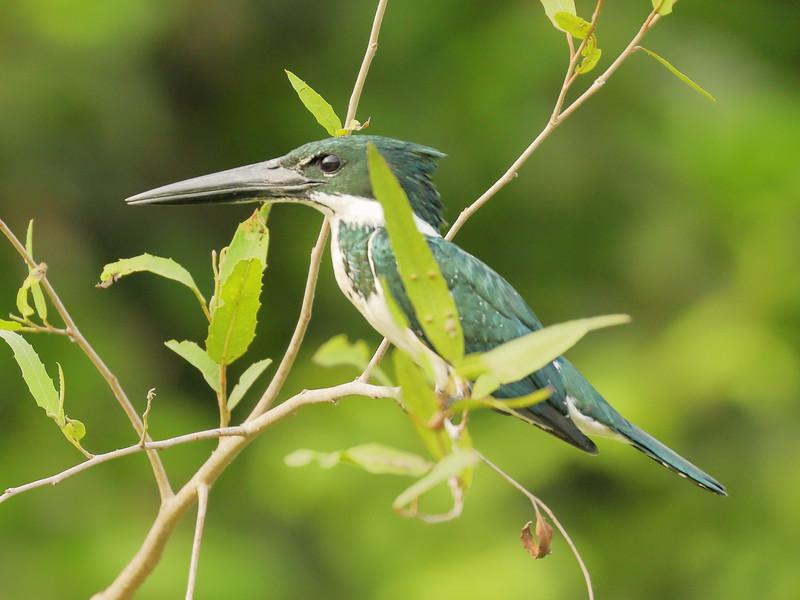 20Sep19a Pantanal 122