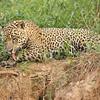 23Sep19 Pantanal 009